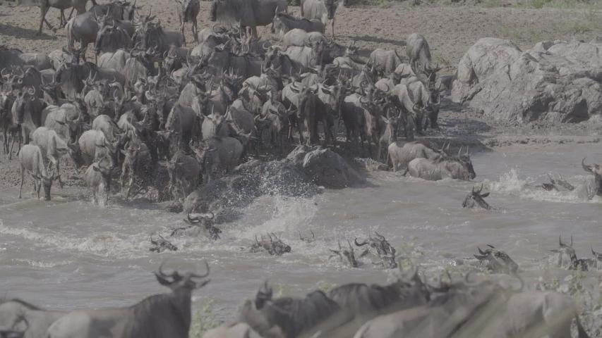 African wildlife footage in natural enviroment | Shutterstock HD Video #1053599225