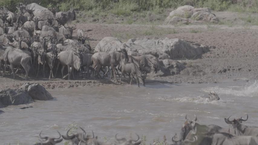 African wildlife footage in natural enviroment | Shutterstock HD Video #1053599228
