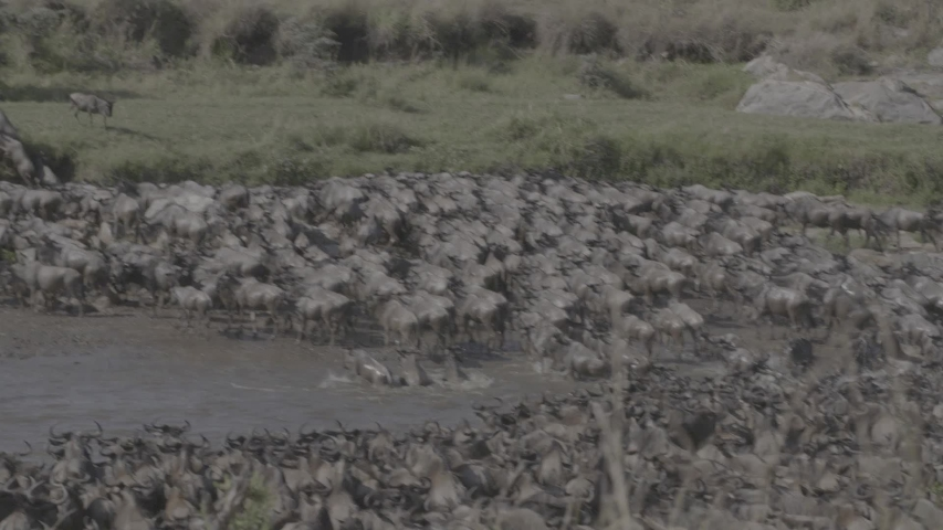 African wildlife footage in natural enviroment | Shutterstock HD Video #1053599234