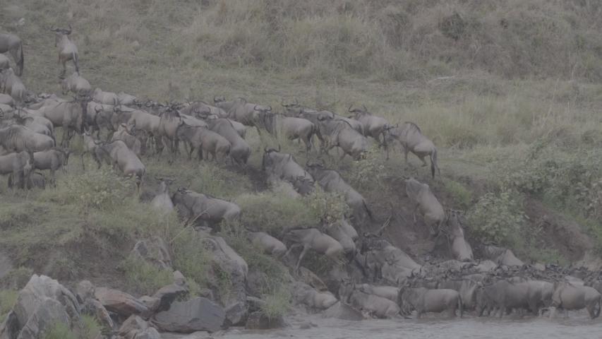 African wildlife footage in natural enviroment | Shutterstock HD Video #1053599240