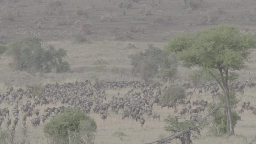 African wildlife footage in natural enviroment | Shutterstock HD Video #1053599252