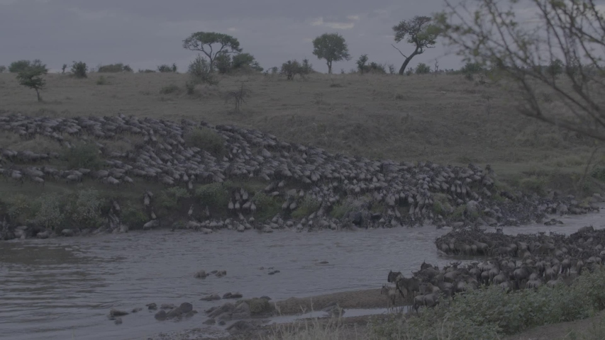 African wildlife footage in natural enviroment | Shutterstock HD Video #1053599255