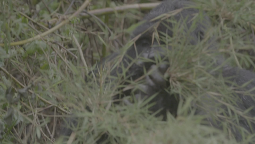 African wildlife footage in natural enviroment | Shutterstock HD Video #1053599261
