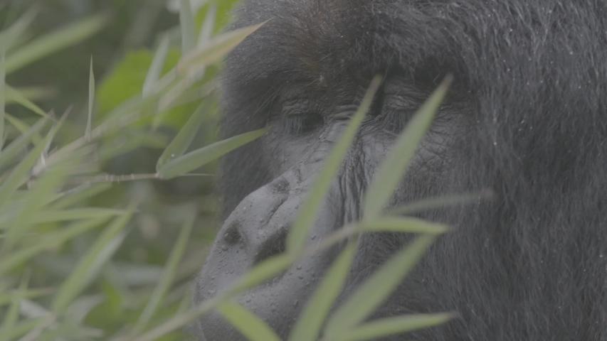 African wildlife footage in natural enviroment | Shutterstock HD Video #1053599276