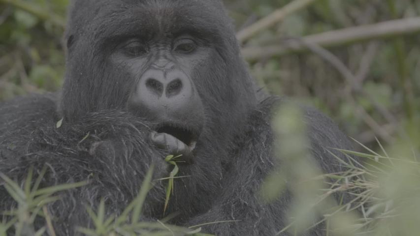 African wildlife footage in natural enviroment | Shutterstock HD Video #1053599285