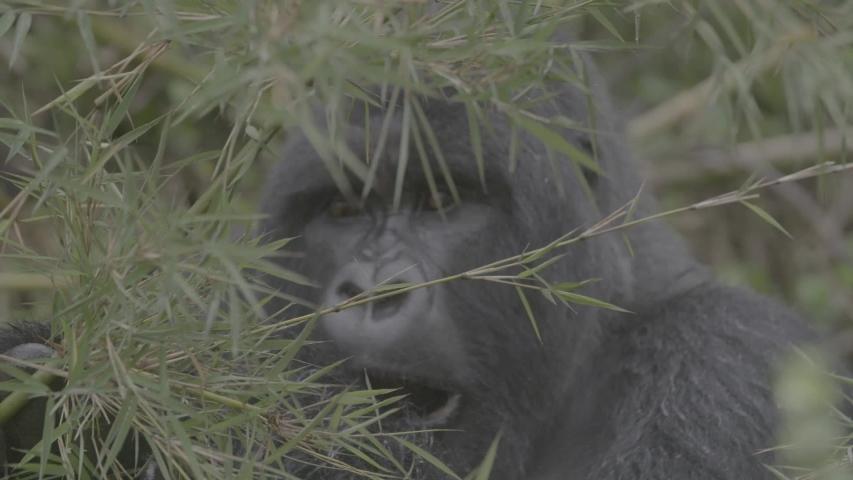 African wildlife footage in natural enviroment | Shutterstock HD Video #1053599288