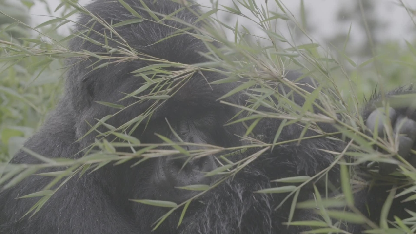 African wildlife footage in natural enviroment | Shutterstock HD Video #1053599312