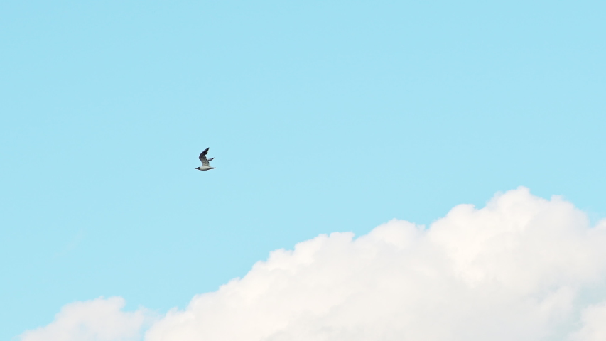 Seagull bird flying fast over blue sky with clouds