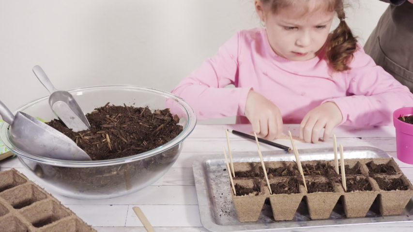 Little girl helping to plant herb seeds into small containers for a homeschool project. | Shutterstock HD Video #1053636488