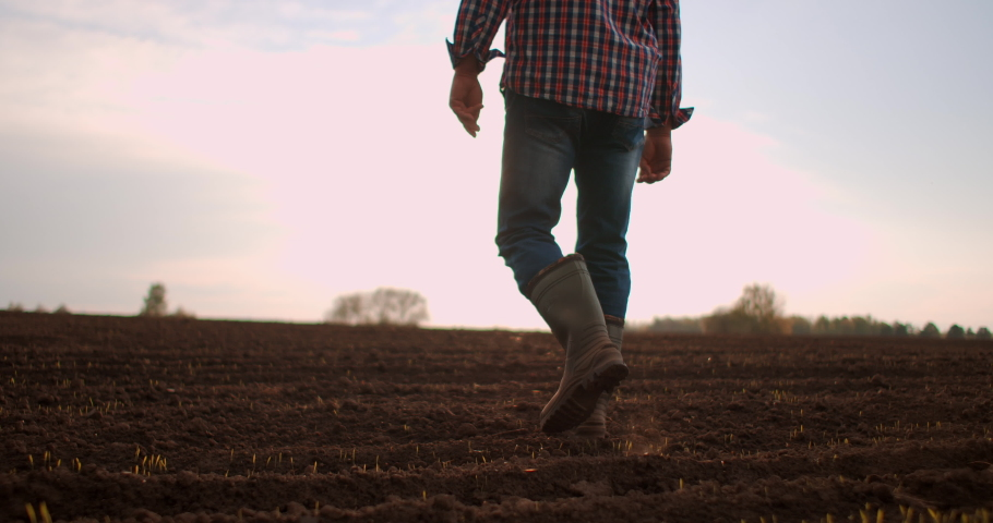 Farmer goes with rubber boots along green field. Rubber boots for work use. A worker go with his rubber boots at sunset time. Concept of agricultural business. Steadicam video | Shutterstock HD Video #1053705188