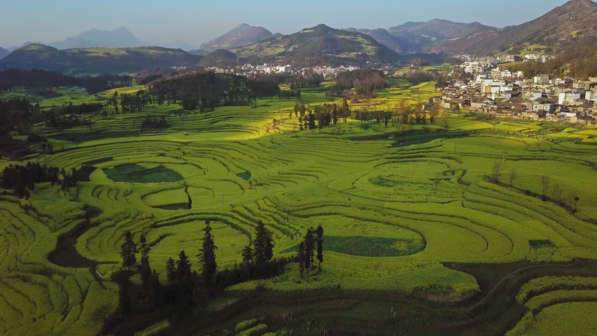 Aerial view drone flight above canola flower field, Luoping County, China   Shutterstock HD Video #1053722816