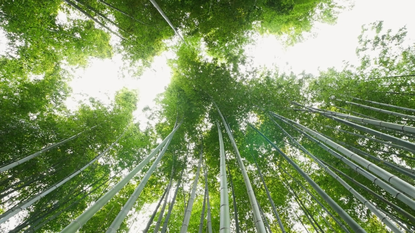 Bamboo forest in Arashiyama area, Kyoto, Japan   Shutterstock HD Video #1053722912