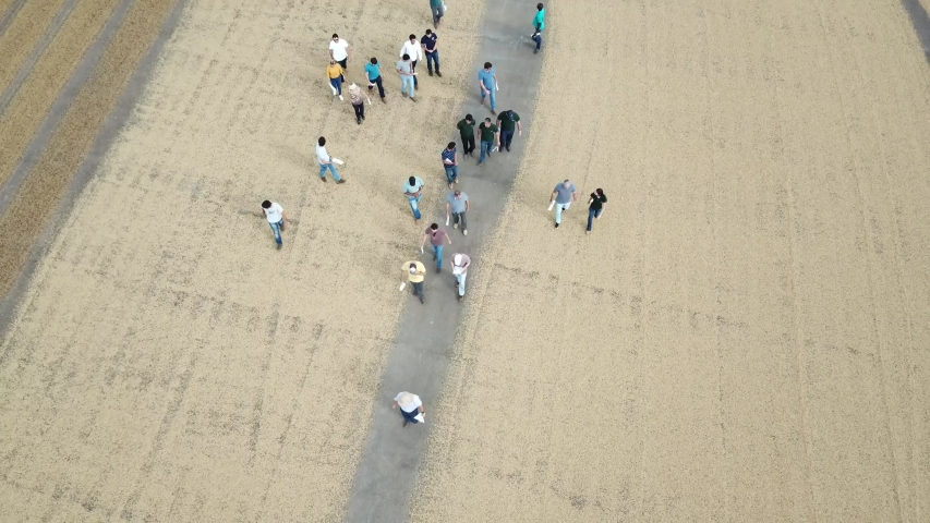 People Visiting A Post-Harvest Yard Of Coffee Arabica Drying Aerial