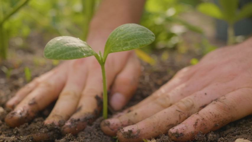Hands putting a beautiful seedling in soil. Close-up shot of planting. Ecology concept. New life concept. Royalty-Free Stock Footage #1053749150