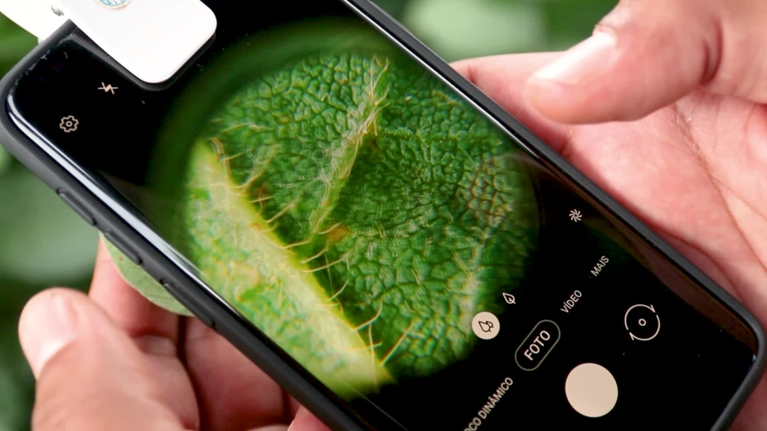 Agribusiness - Tablet in the hand of the farmer following the growth of soybeans. Soybean leaf in close up, Green soybean field. Technology in the field. - Agriculture Royalty-Free Stock Footage #1053778820