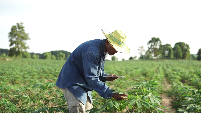 Footage B roll of Smart farmer using a tablet for checklist agricultural products quality. use technology for good product. Cassava field agriculture concept footage B-roll. Royalty-Free Stock Footage #1053783779