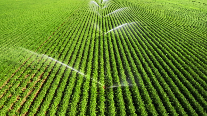 Irrigation: agriculture footage of vast green fields being artificially watered in bright sunshine, flying backwards over the sprinklers and capturing rainbow color effects in the water Royalty-Free Stock Footage #1053784346