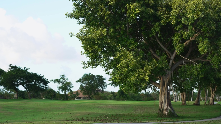 Amazing tree in the green golf park Punta Cana Dominican Republic. Summer evening in green garden background.