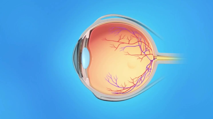3D medical anatomy of an animated eye on blue background. Age related macular degeneration. Royalty-Free Stock Footage #1053909923