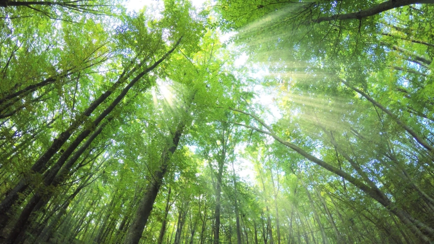 Video of Into the Forest | Shutterstock HD Video #1053920129