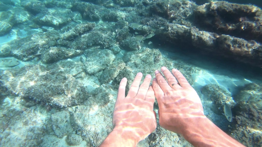 School of fish in shallow water of coral reef underwater in Mediterranean sea 4K 60fps   Shutterstock HD Video #1053928568