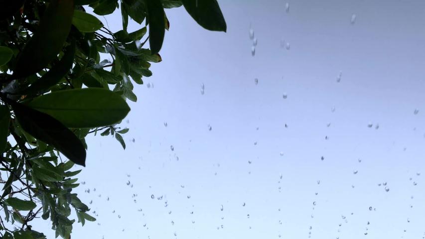 Rain and the nature. rain drop leaf. rain and trees.