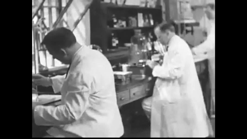 CIRCA 1930s - Scientists in a lab, dairy cows and pasteurization combat unclean milk, in 1938.