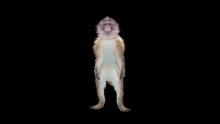 monkeys Dance CG fur 3d rendering animal realistic CGI VFX Animation Loop  composition 3d mapping cartoon, with Alpha matte