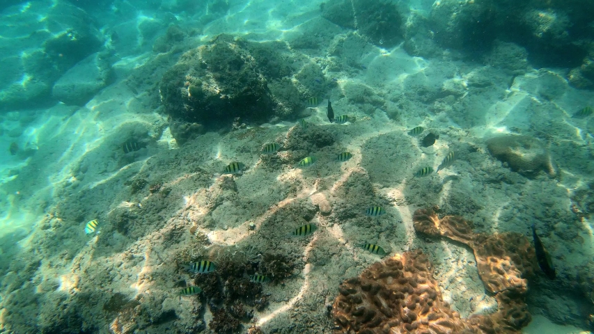 Underwater shot of marine flock of fish among multi-colored-coral   Shutterstock HD Video #1054007606