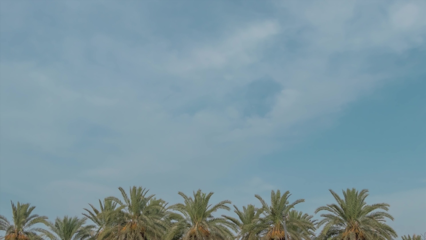 Time lapse sky with palm tree in Oman