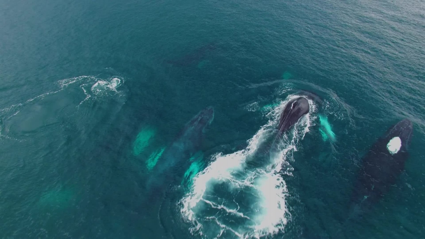 Humpback Whale Watching off Isla Conadora, Las Perlas Panama Aerial View | Shutterstock HD Video #1054046876