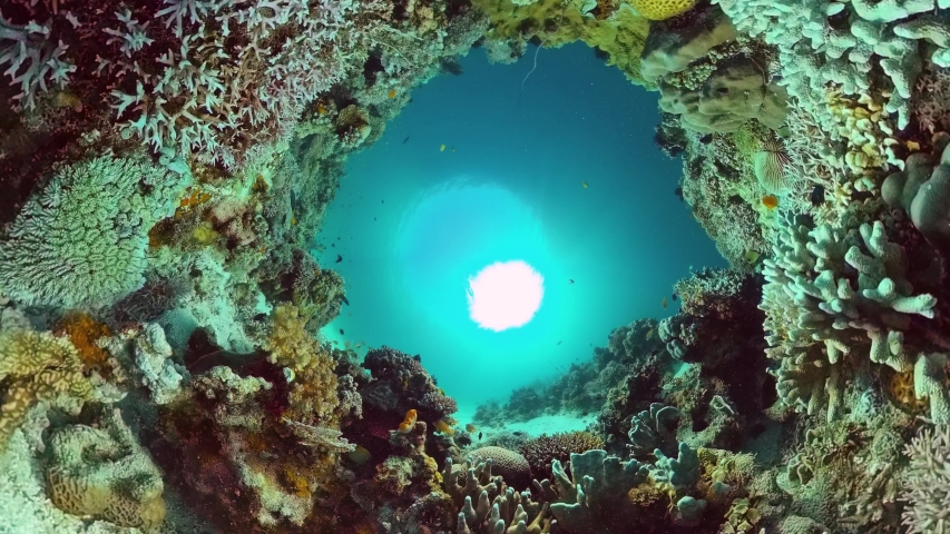 Tropical sea and coral reef. Underwater Fish and Coral Garden. Underwater sea fish. Tropical reef marine. Colourful underwater seascape. Panglao, Bohol, Philippines. | Shutterstock HD Video #1054050869