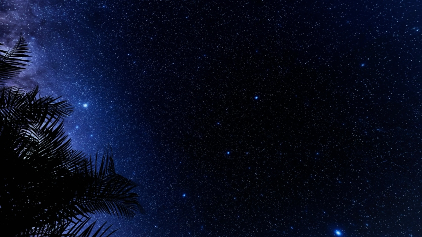 Vintage illustration with silhouette leaf palm tree stars. Summer beach floral design. Tropical landscape. Night scene. 4k   Shutterstock HD Video #1054060874