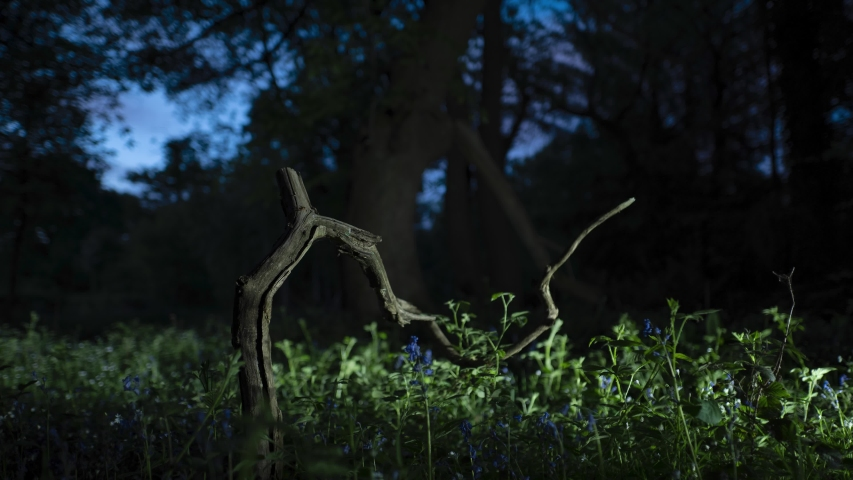 Light painting fallen tree branch in forest at night | Shutterstock HD Video #1054071062