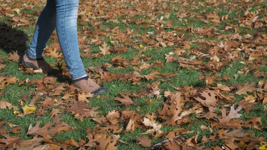 Autumn oak leaves on the grass. Walk on oak leaves.
