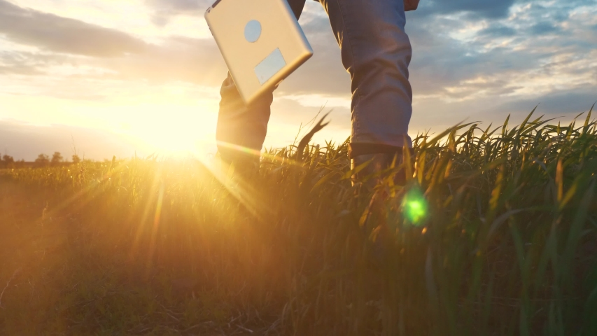 agriculture. smart farming technology. close-up of farmer walk feet in boots with digital tablet walk on green field of grass wheat at sunset. farmer walk agriculture concept Royalty-Free Stock Footage #1054100645
