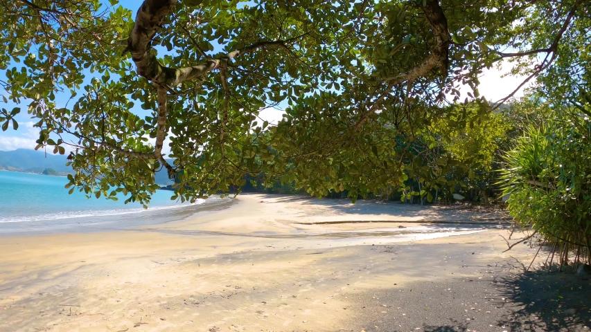 Tropical beach rain forest, sunny day brazil south américa, tree summer day | Shutterstock HD Video #1054109198
