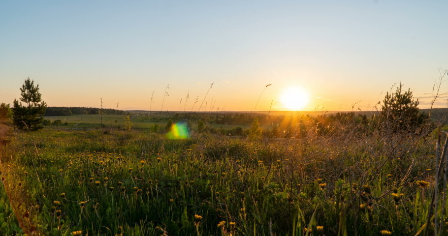 Spring field. Dandelion field, sunset light, spring, freedom. Yellow flowers, green grass. Camera movement to the right, time lapse, 4k