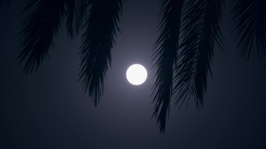 Moon in the night sky through the foliage of tropical palm trees. palm leaves sway from the wind. High quality 4k footage