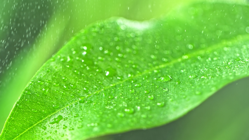 Super Slow Motion Macro Shot of Raining on a Leaf at 1000fps. | Shutterstock HD Video #1054176872