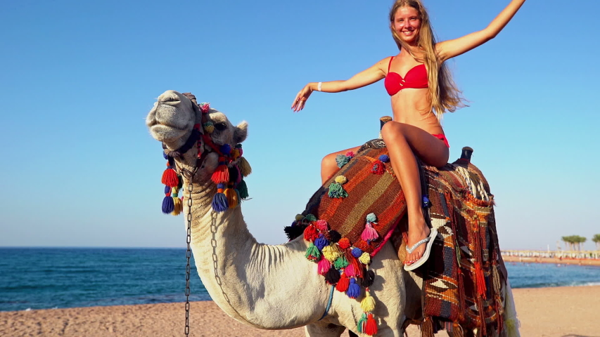 Egypt Tourism With Camel Riding Stock Footage Video 100 Royalty Free 1054177463 Shutterstock