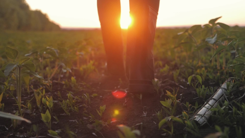 Farmer goes with rubber boots along green field. Rubber boots for work use. A worker go with his rubber boots at sunset time. Concept of agricultural business. Steadicam video. Royalty-Free Stock Footage #1054188740