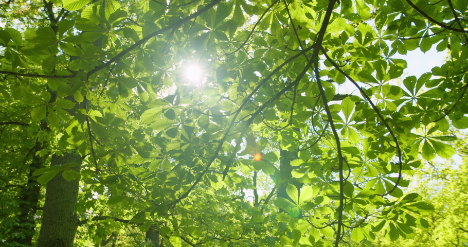Looking up to sun shining through bright green tree leaves in forest