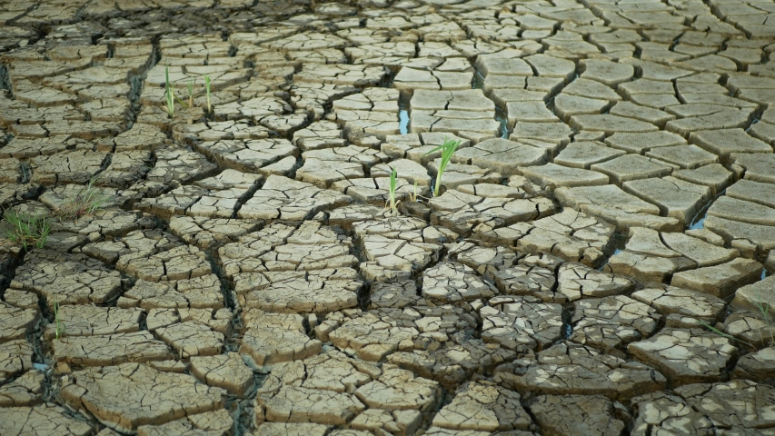Drought cracked pond wetland, swamp very drying up the soil crust earth climate change, environmental disaster earth cracks very, death for plants and animals, soil dry degradation marsh | Shutterstock HD Video #1054201196
