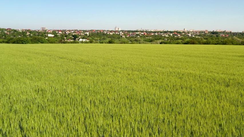Ripe grain fields in latvian countryside, Semigallia region.DJI Mavic 2 Pro | Shutterstock HD Video #1054205366