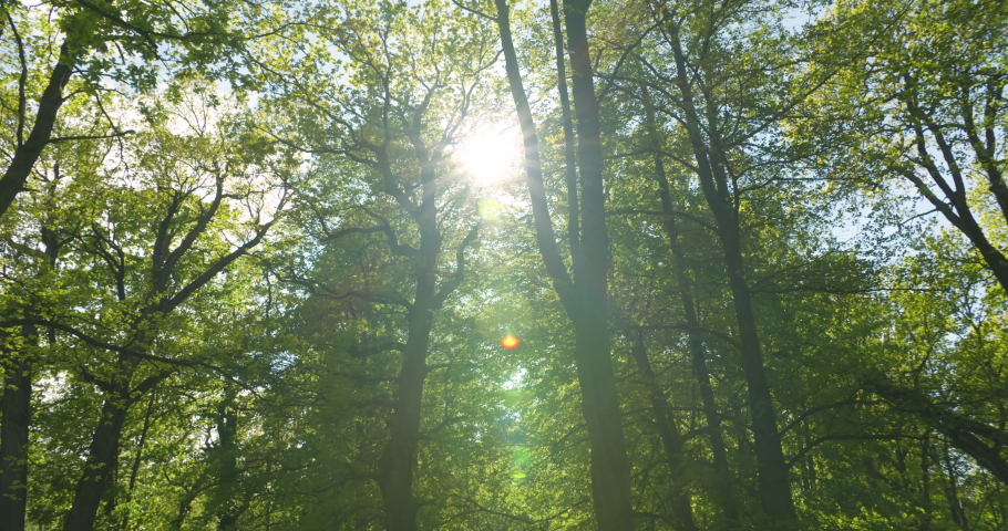 Sun shining through bright green tree leaves in forest in spring | Shutterstock HD Video #1054214552