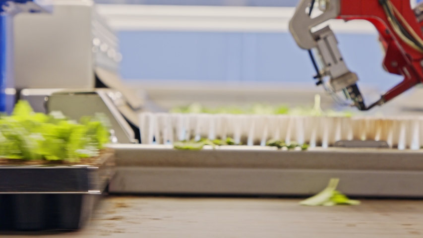 Automated planting process using advanced robot for planting leaves in trays Royalty-Free Stock Footage #1054255805