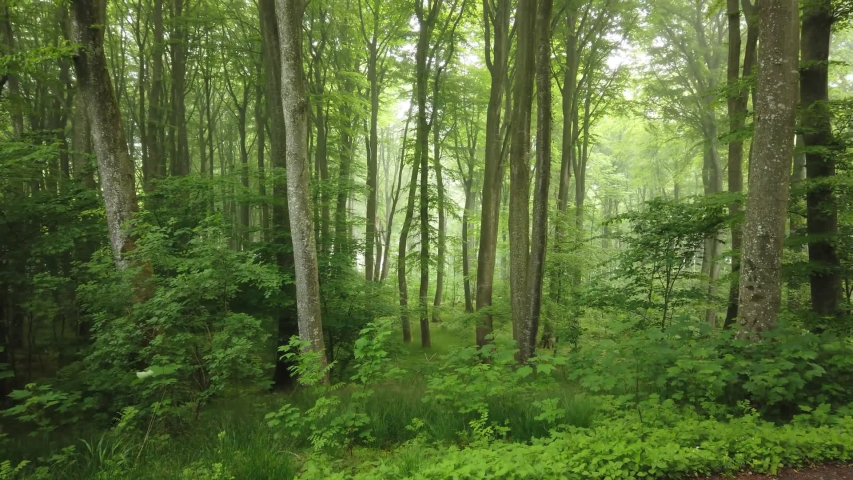 Gwydir Forest Park \ Wales footage of the Forest in Wales, taken by handheld camera | Shutterstock HD Video #1054262315