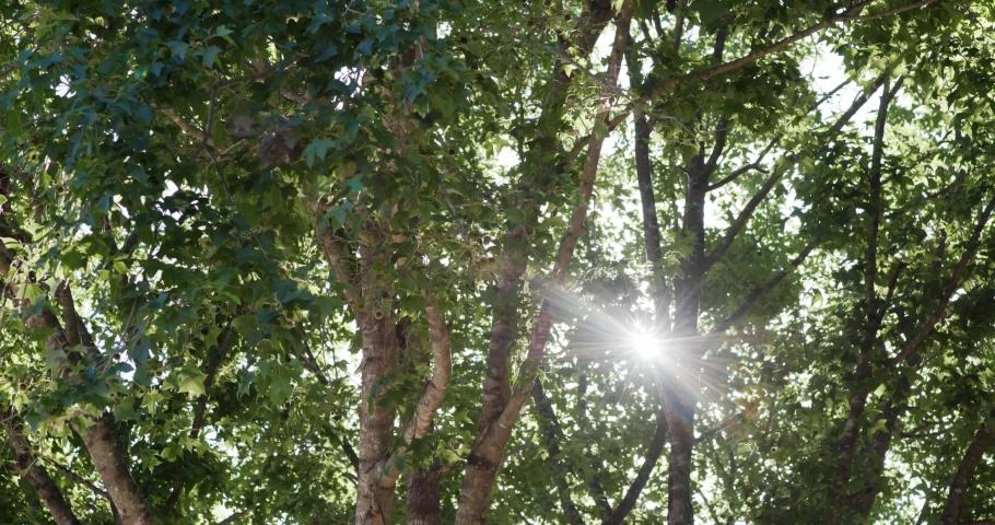 Sunlight pass though the tree bark | Shutterstock HD Video #1054271750