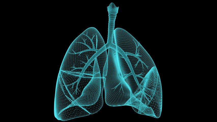 Pneumania lungs image rotating 360 degree. Lungs damage caused by the coronavirus. Covid-19 studying human lungs Royalty-Free Stock Footage #1054280381
